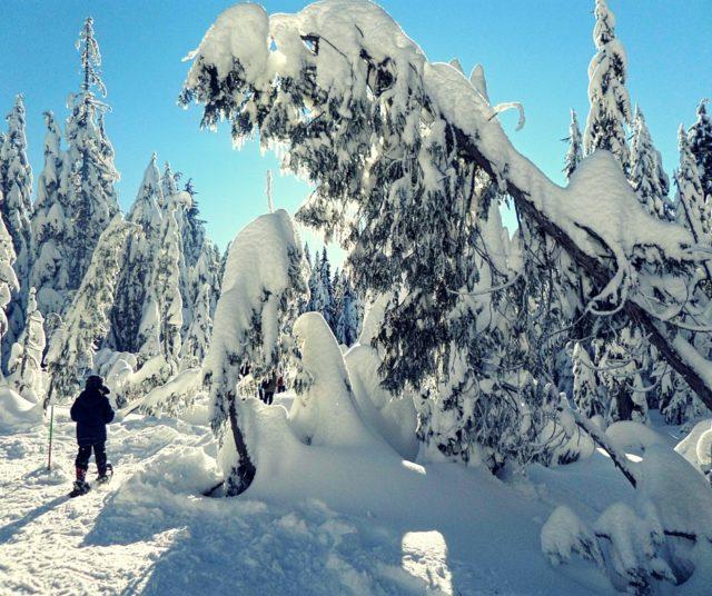 Cypress Mountain na rakietach śnieżnych